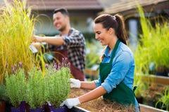 Garten-Center-Angestellte lizenzfreies stockfoto