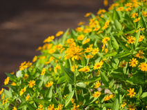 Garten der gelben Blume Stockfotos