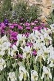 Garten der Ligurier Küste stockfotos