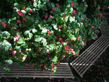 Garten der Rosen Lizenzfreies Stockbild