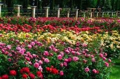 Garten der Rosen Stockbilder
