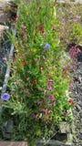 Garten der wilden Blume Stockfotos