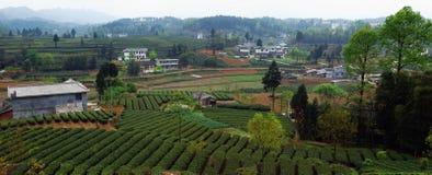 Garten des grünen Tees stockbild