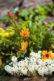 Garten-Detail Stockfoto