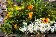 Garten-Detail Stockfotografie