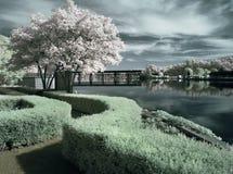 Garten durch den Fluss Stockfoto