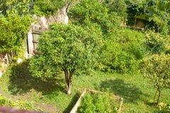 Garten-Eingang von der Terrasse Lizenzfreie Stockbilder