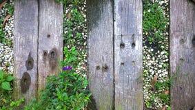 Garten-Gehweg Lizenzfreie Stockbilder