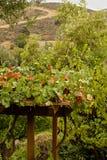 Garten-Gitter stockfoto