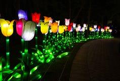 Garten-Glühen Dubai, UAE