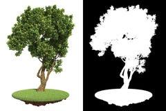Garten-grüner Baum mit Detail-Raster-Maske Lizenzfreies Stockfoto