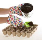 Garten-Handschuhe, Schaufel, die Boden in Potenziometer platziert Lizenzfreies Stockbild