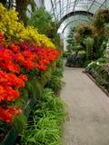 Garten: historische Glashausblumenbildschirmanzeige - v stockfotos