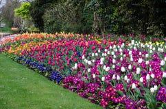 Garten III stockbilder