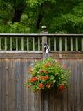 Garten im Frühjahr Stockfotos