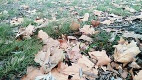 Garten im Herbst Stockfotos