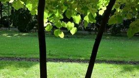 Garten im Park - verlässt in der Brise stock video