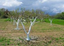 Garten im Vorfrühling Stockfotografie