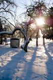 Garten im Winter Stockfoto