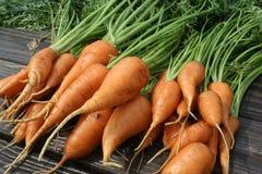 Garten-Karotten Stockbild