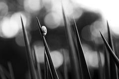 Garten-kleine Geschöpfe Stockfoto