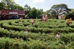 Garten-Labyrinth-Nova Petropolis Brasilien stockbilder