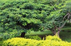 Garten mit Bäumen Lizenzfreie Stockbilder