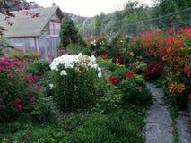 Garten mit Blumen Lizenzfreies Stockfoto