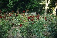 Garten mit Blumenbeeten von roten Rosen Lizenzfreie Stockfotografie