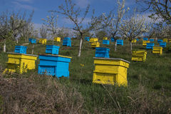 Garten mit bunten Bienenstöcken Stockfotos