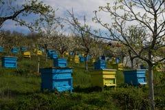 Garten mit bunten Bienenstöcken Stockbild
