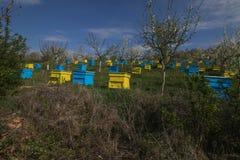 Garten mit bunten Bienenstöcken Stockbilder