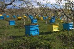 Garten mit bunten Bienenstöcken Stockfotografie