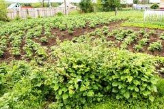 Garten mit den Betten und den Sträuchen Lizenzfreies Stockfoto