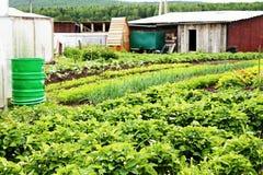 Garten mit den Betten und den Sträuchen Lizenzfreie Stockfotos