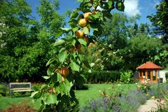 Garten mit Gartenhaus Stockfotos