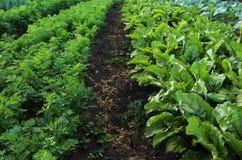 Garten mit Gemüsebetten Stockfotografie