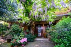 Garten mit Glyzinieblumen Lizenzfreie Stockfotos