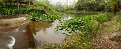 Garten mit Morgennebel Lizenzfreies Stockfoto
