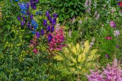 Garten mit vielen Blumen Stockbilder