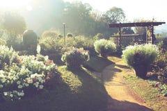 Garten morgens Blendenfleckeffekt mit Weinleseton Lizenzfreie Stockfotografie