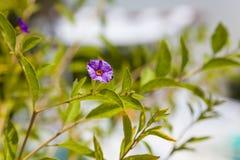 Garten nah oben auf der Blume mit Tropfen stockbild