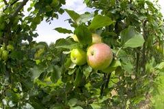 Garten organische ryton ryton Gärten Warwickshire Midlands England Lizenzfreie Stockfotos