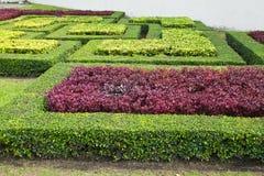 Garten-Pfad mit Topiary Stockfoto