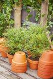 Garten Pottingbereich Stockbild