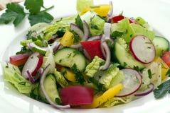 Garten-Salat Stockfotografie
