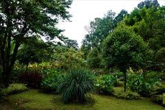 Garten in San Gerardo de Dota am regnerischen Tag stockbild