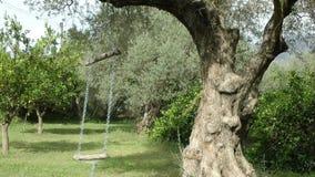 Garten-Schwingen, das von Olive Tree hängt stock video footage