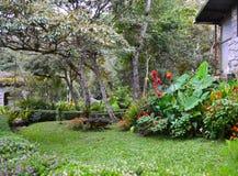 Garten in Selva Negra (Ecolodge), Matagalpa, Nicaragua lizenzfreies stockbild