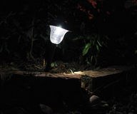 Garten-Solarlicht in der Dunkelheit Stockfoto